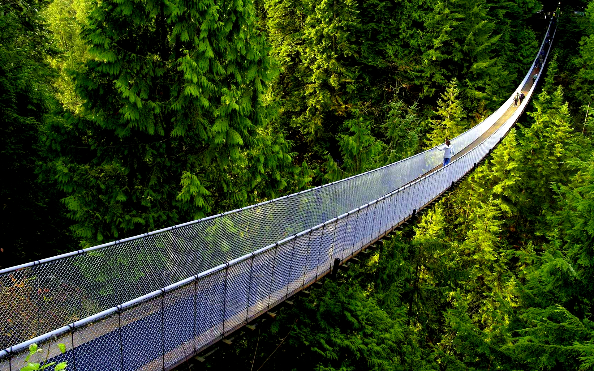 hanging-bridge-235451