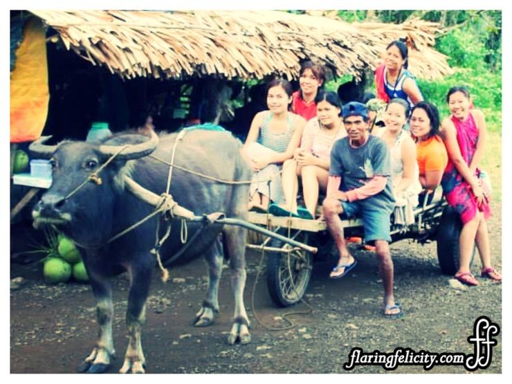 Carabao Ride Home